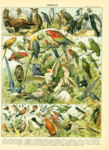 85067b4ebf18c1d3a2b0b0bbcd9ca98b--tropical-birds-french-vintage