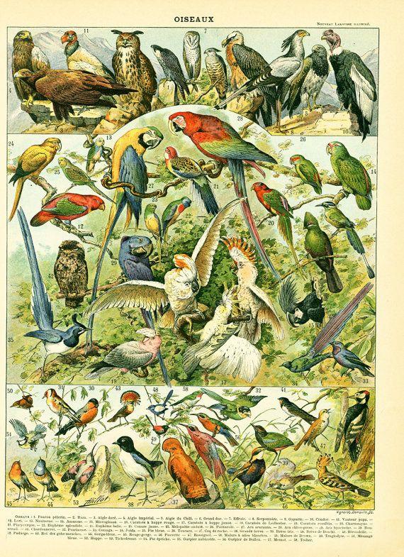 85067b4ebf18c1d3a2b0b0bbcd9ca98b--tropical-birds-french-vintage