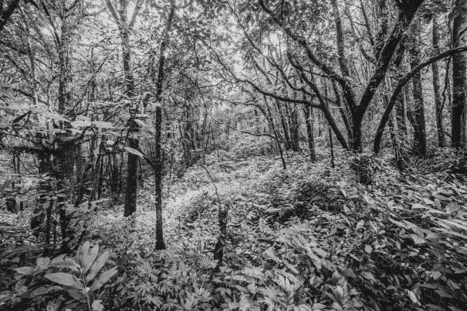 depositphotos_79889436-stock-photo-forest-black-and-white