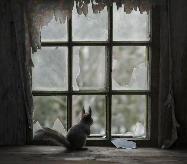 maison-abandonnée-animaux-12 (1)