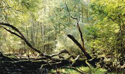 arbre_foret_senart_aguerrier