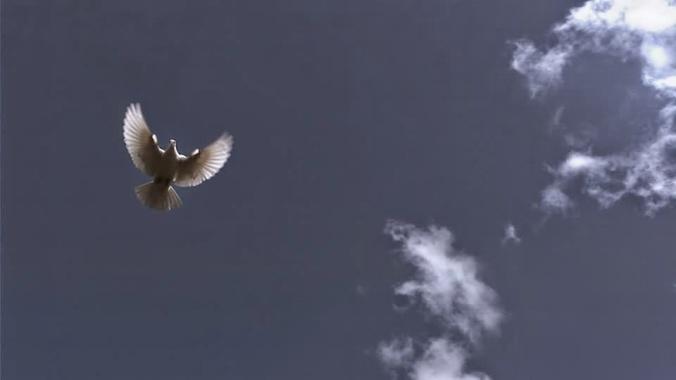 318474890-colombe-de-la-paix-pigeon-blanc-innocence-ciel-bleu