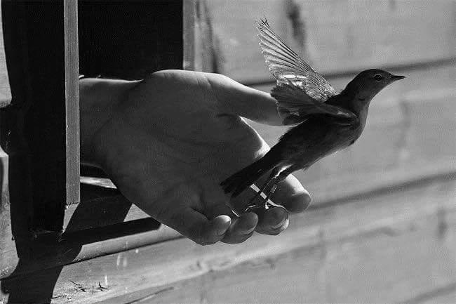 Main-à-travers-des-barreaux-libère-un-oiseau-qui-prend-son-envol-noir-et-blanc
