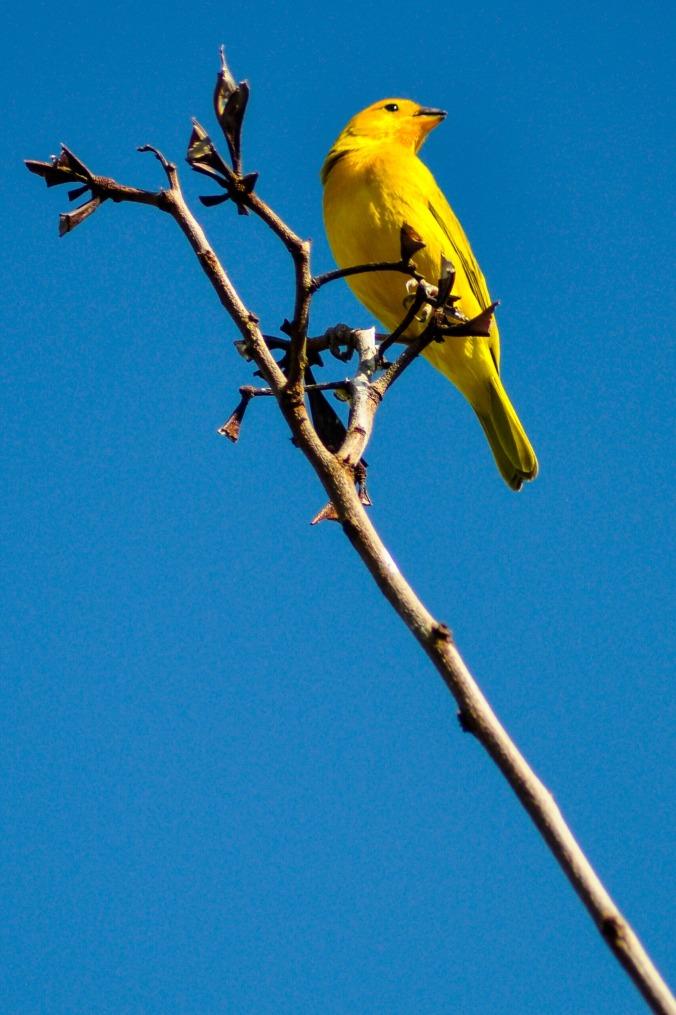tatacoa-oiseau.jpg