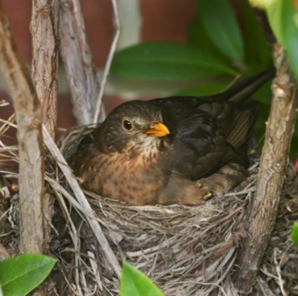 Birds-nest-copy