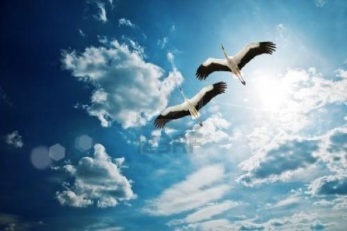 couple-de-cigogne-au-ciel-bleu