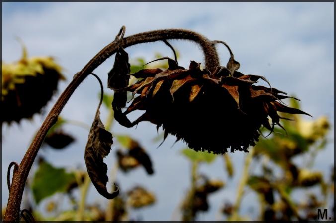 ils-aiment-les-fleurs-fanees-les-fleurs-sechees-les-immortelles-et-les-pensees-jacques-prevert-002c8c72-419d-434f-bb75-1c3ebaaa3450 (1)
