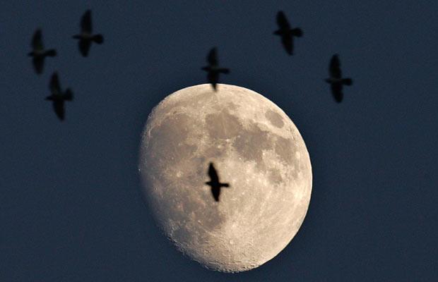 moon-birds_1493019i