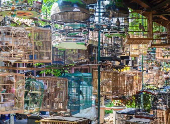 depositphotos_118305446-stock-photo-the-birds-market-yogyakarta-java