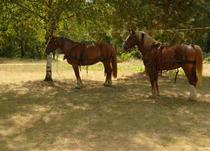 chevaux _au_repos.jpg