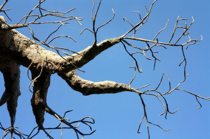 tree-1273681_960_720