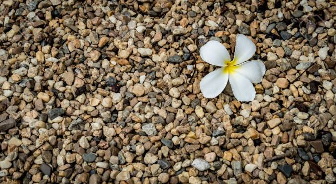Small gravels with white flower