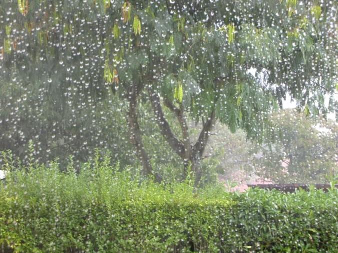 arbre sous la pluie 3