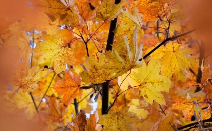 automne-feuilles-nature-arbre