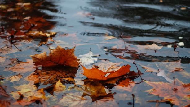 automne 16
