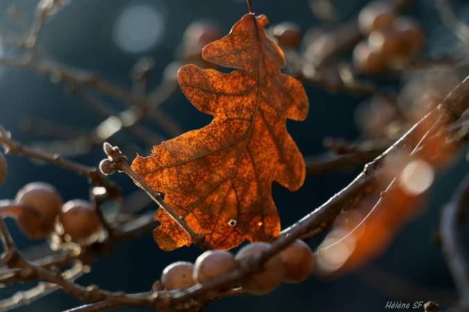 automne 17