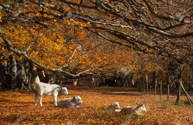 automne 22