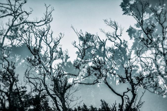 La forêt maritime #8