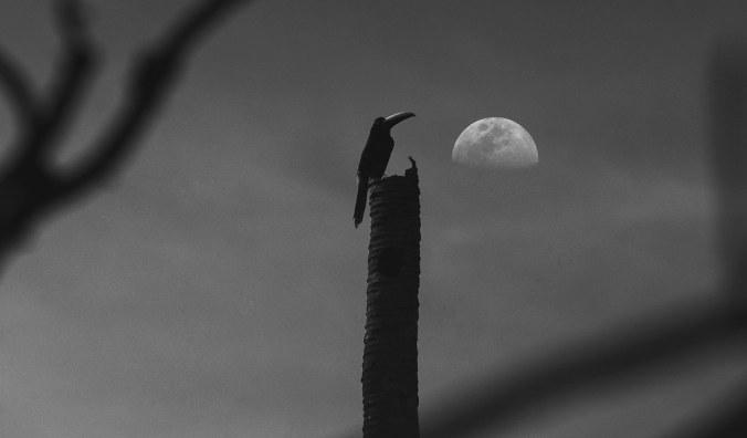 oiseau de l'aube
