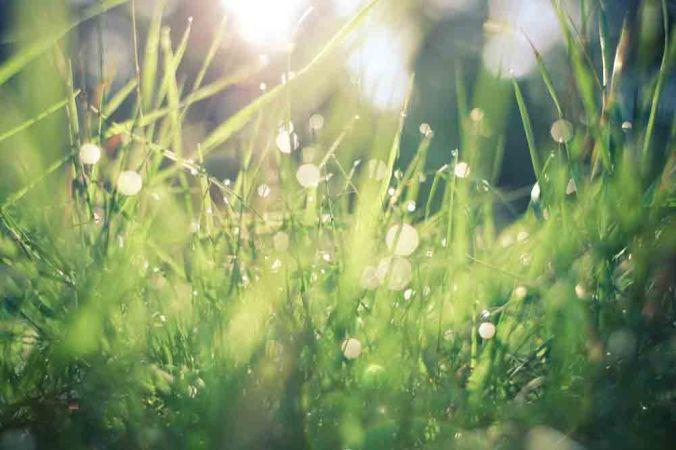viens regarder l'herbe pousser
