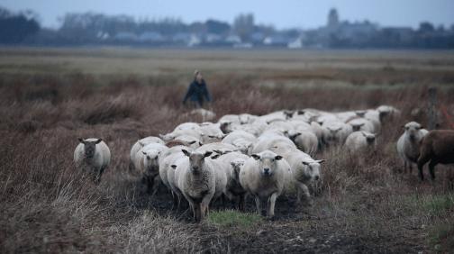 en faveur de la bergère