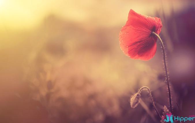 fleur tutélaire