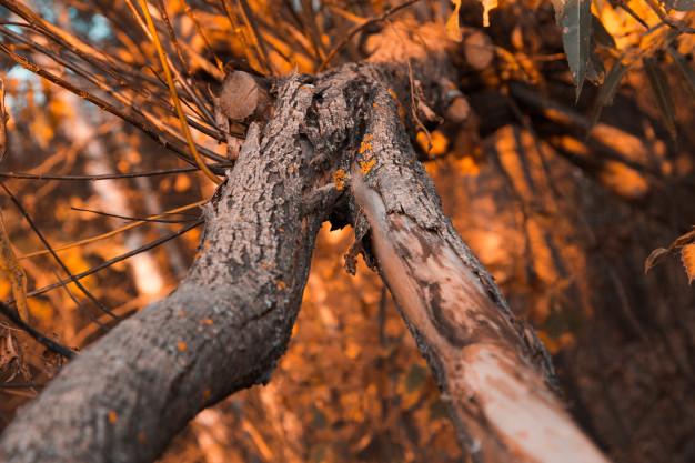 fermer-vieille-ecorce-arbre-foret-automne_7280-2463