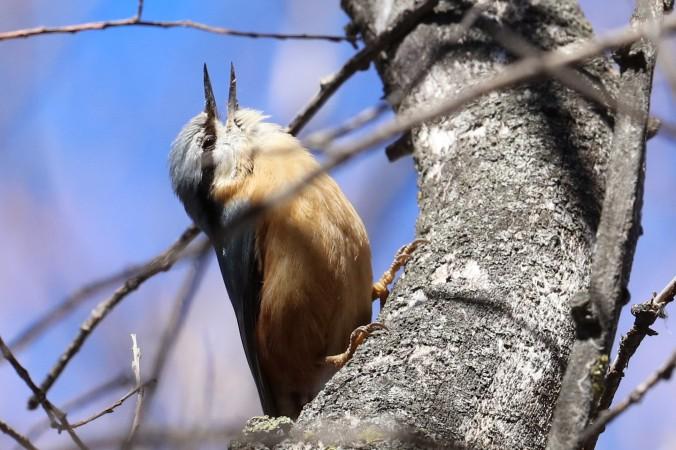 l'oiseau d'aube